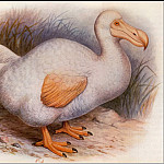 PO_Extinct_Animals - PO_ExtAn_002_Dodo_blanc_de_la_Reunion