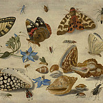 часть 3 -- European art Европейская живопись - Jan van Kessel Butterflies shells & insects 99199 20