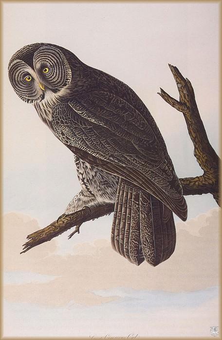 Большая благородная сова. Джон Джеймс Одюбон