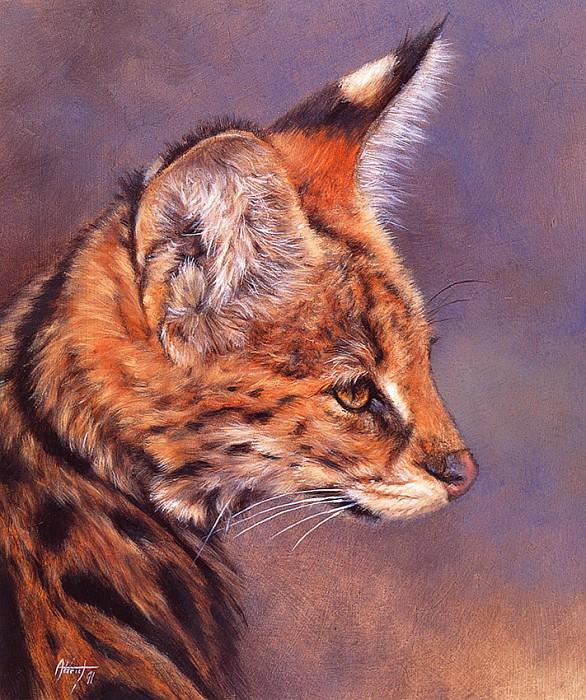 Serval. Edward Aldrich