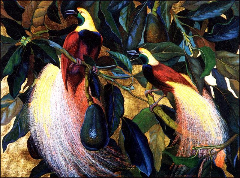 Birds Of Paradise. Jessie Arms Botke