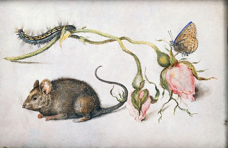 A Mouse and a Rose. Jan Brueghel The Elder