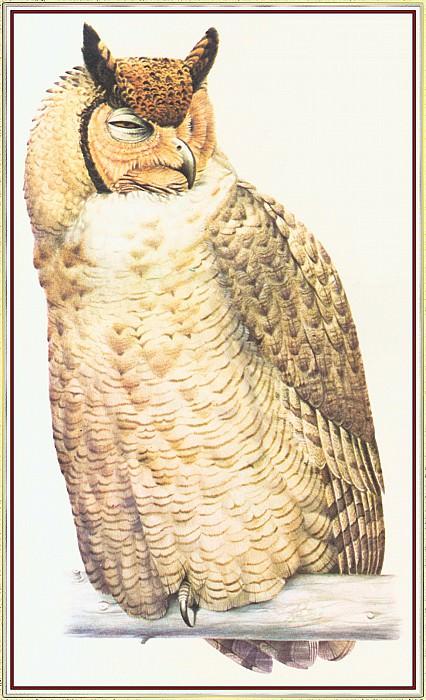 Eagle Owl. Peter Barrett