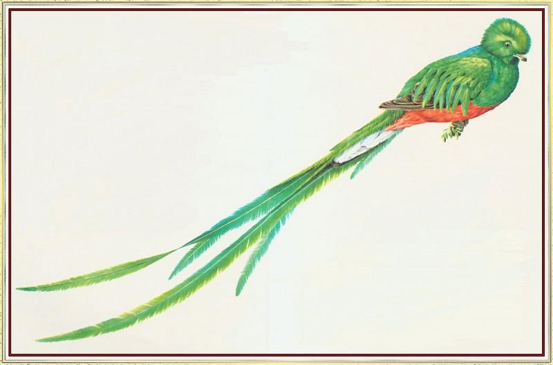Quetzal. Peter Barrett