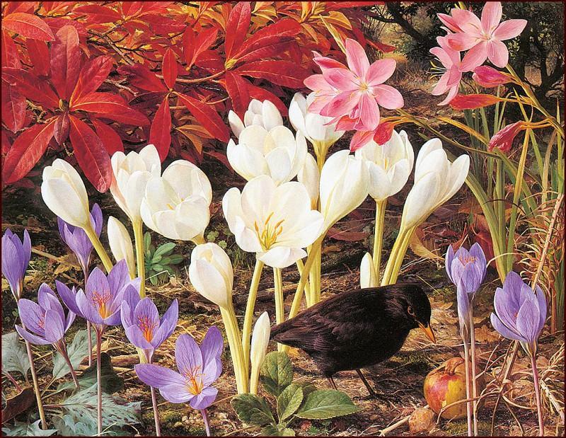 Осенние цветы. Рэймонд Бут