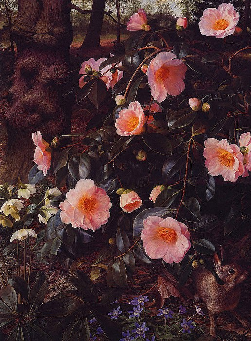 Camllias & Rabbit. Raymond Booth