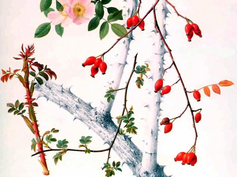an artists garden. Raymond Booth