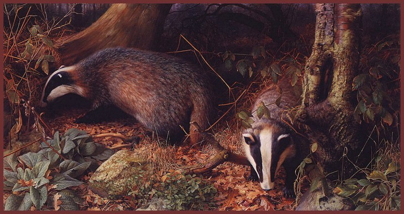 Badgersin Adel Wood. Raymond Booth