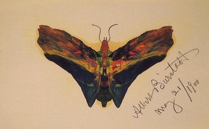 Бабочка. Альберт Бирштадт