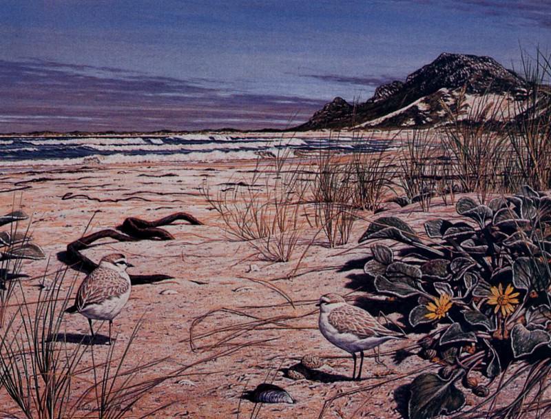 Ржанки, гнездящиеся на взморье, 1996. Саймон Барлоу
