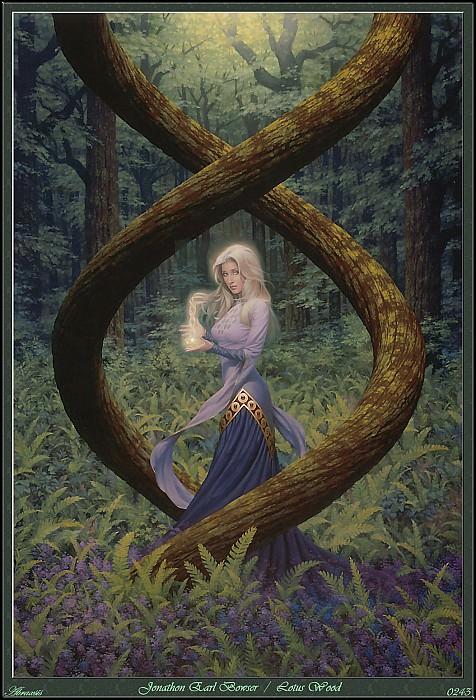 Lotus Wood (Abraxsis). Jonathan Earl Bowser