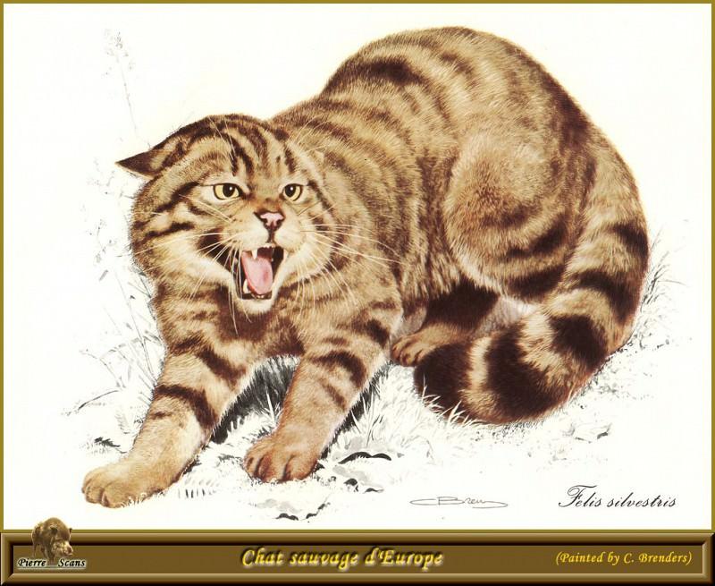 Европейская дикая кошка. Карл Брендерс