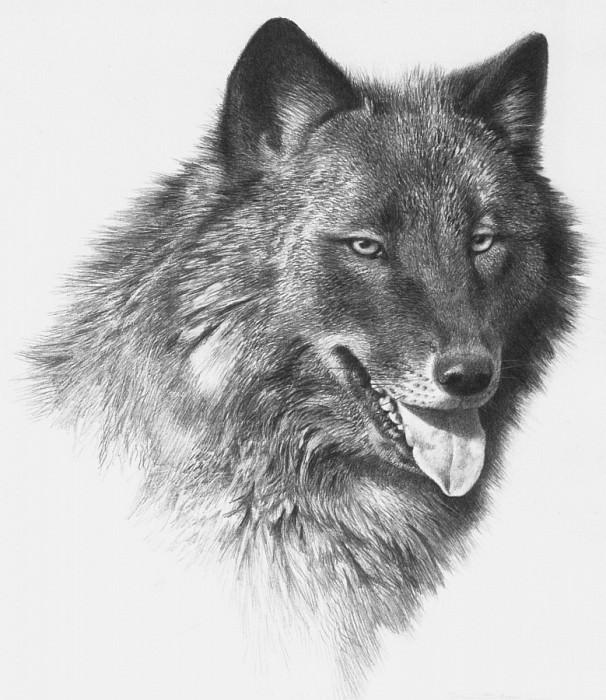 Черный волк. Карл Брендерс