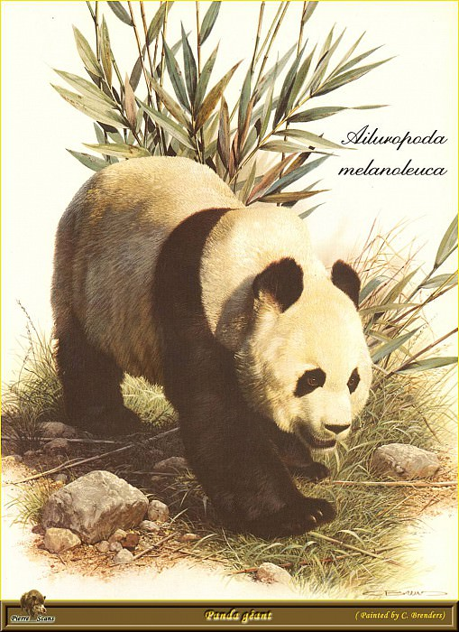 Гигантская панда. Карл Брендерс
