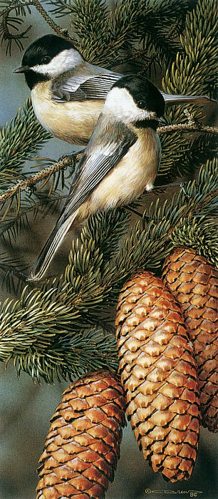 kb Brenders Black Capped Chickadees. Карл Брендерс