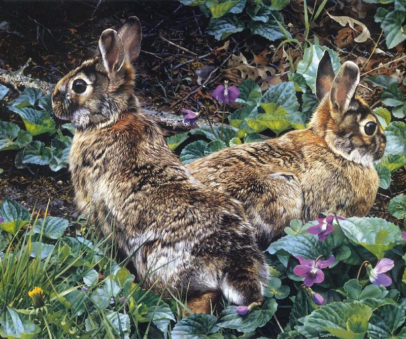 Фиолетовые тропки и одичавшие американские кролики. Карл Брендерс