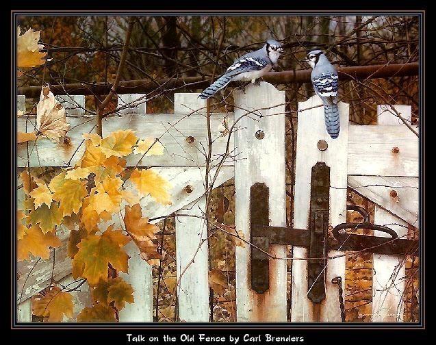 Разговор на старом заборе. Карл Брендерс