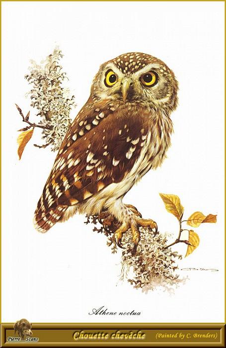 Небольшая сова. Карл Брендерс