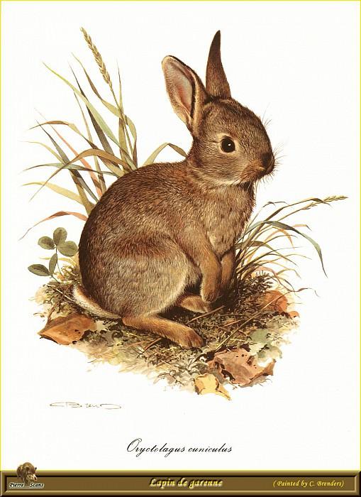 Кролик, выращенный в садке. Карл Брендерс
