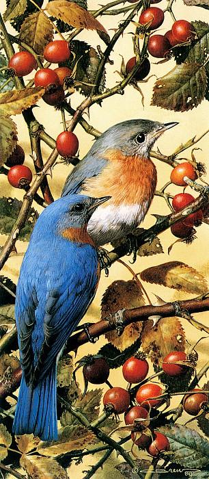 Мелкие певчие птицы с синей спинкой. Карл Брендерс