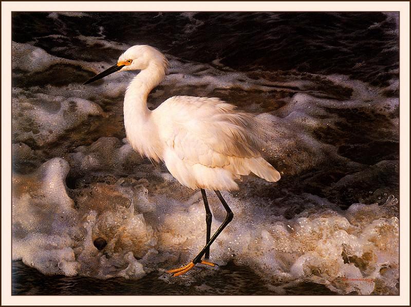 Берега островов - Белая цапля. Карл Брендерс