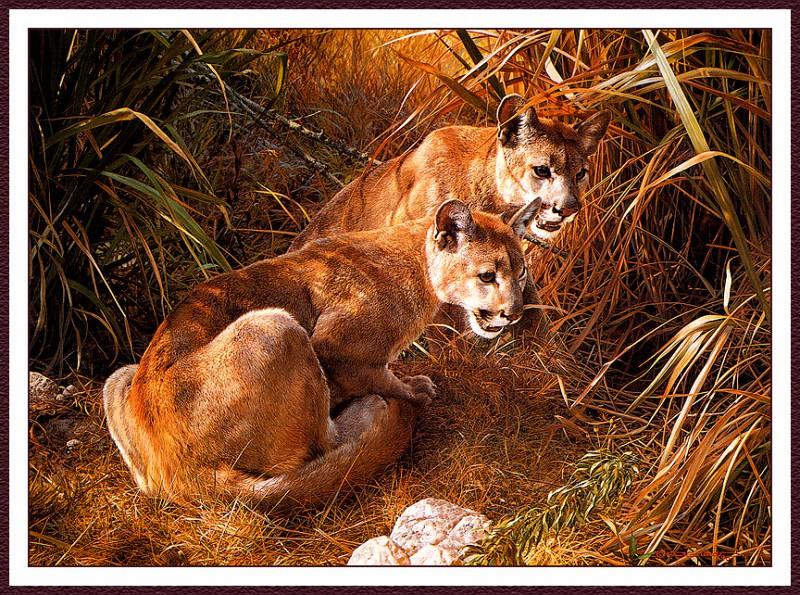 Тени в траве - молодые кугуары. Карл Брендерс