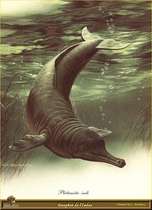 Индийский дельфин. Карл Брендерс