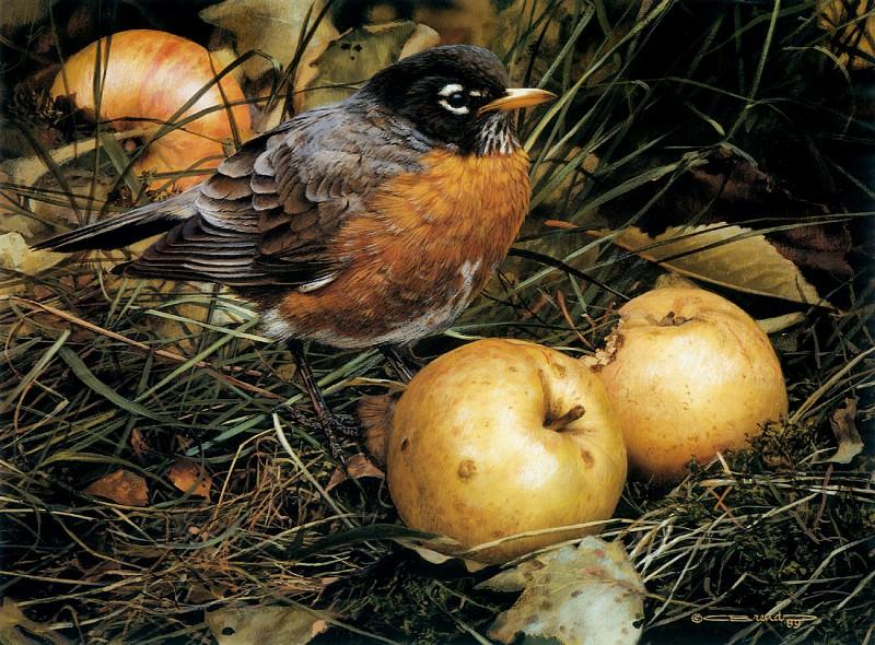 Любитель яблок. Карл Брендерс