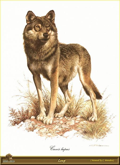 Волк. Карл Брендерс