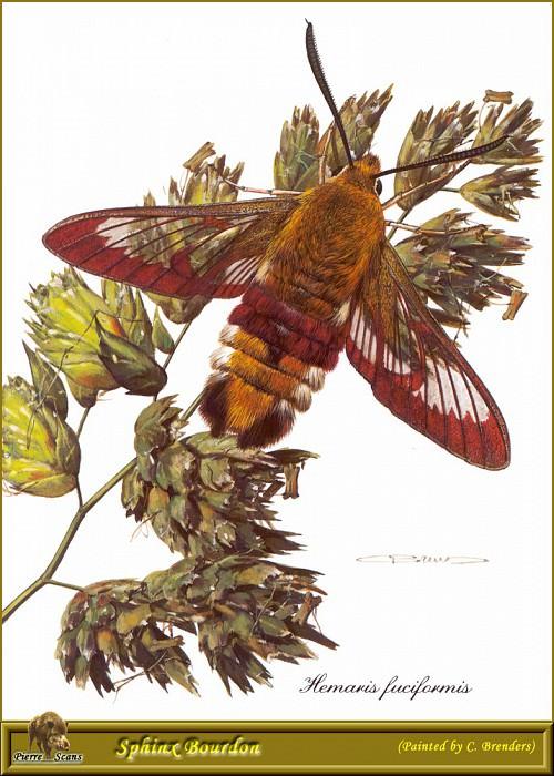 Сумеречная бабочка. Карл Брендерс