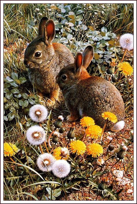 Красочная площадка для игр - Одичавшие американские кролики. Карл Брендерс