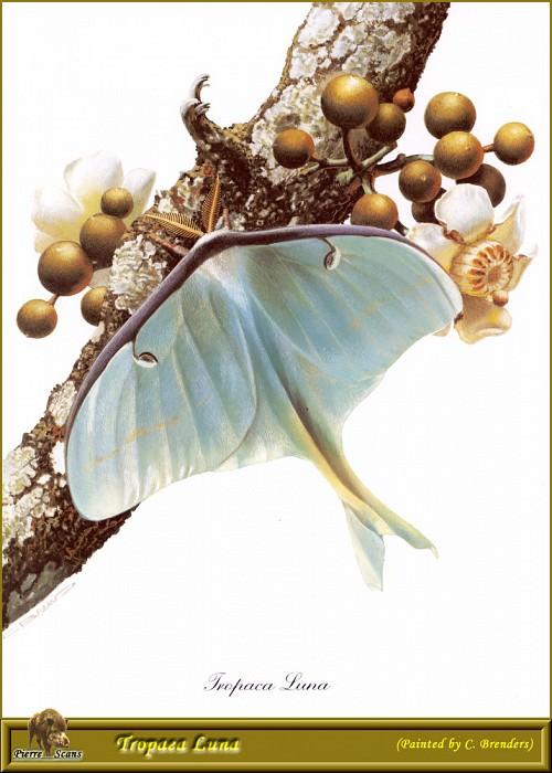 PO PButBr 58 Tropaea Luna. Карл Брендерс