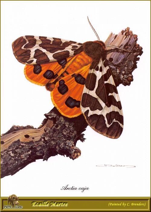 Бабочка-медведица. Карл Брендерс