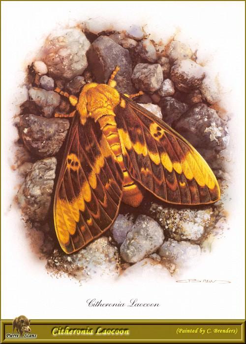 PO PButBr 46 Citheronia Laocoon. Карл Брендерс