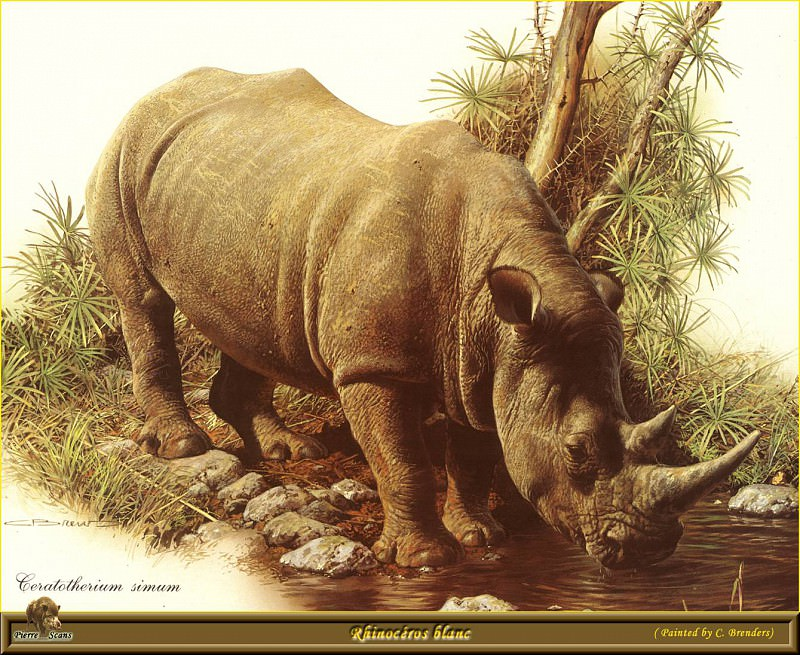 Черный носорог. Карл Брендерс
