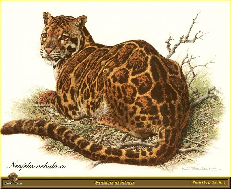 Леопард темного окраса. Карл Брендерс