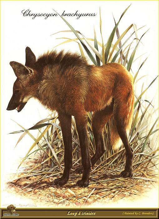 Гривастый волк. Карл Брендерс