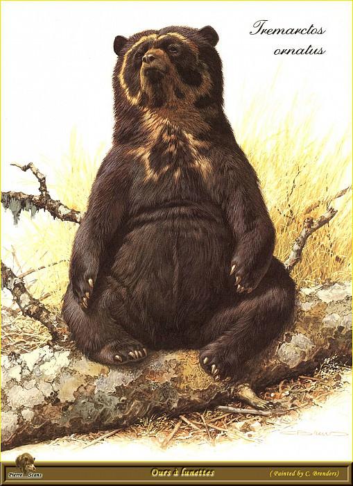 Очковый медведь. Карл Брендерс