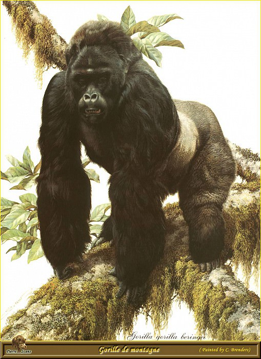 Горная горилла. Карл Брендерс