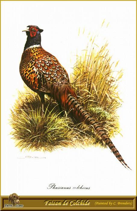 Колхидский фазан. Карл Брендерс
