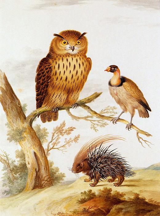 Owl vulture and hedgehog. Johannes Bronkhorst