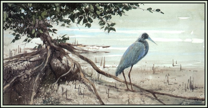 Habitat Mangroves 3. Roger Bansemer