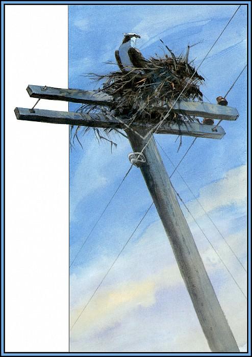 Osprey 3. Roger Bansemer