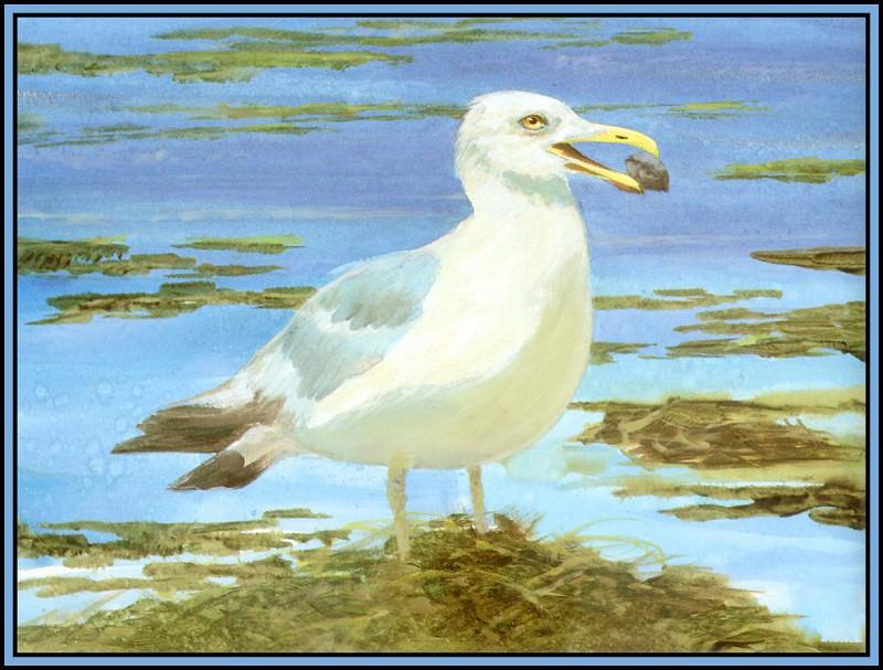 Herring Gull 1. Roger Bansemer