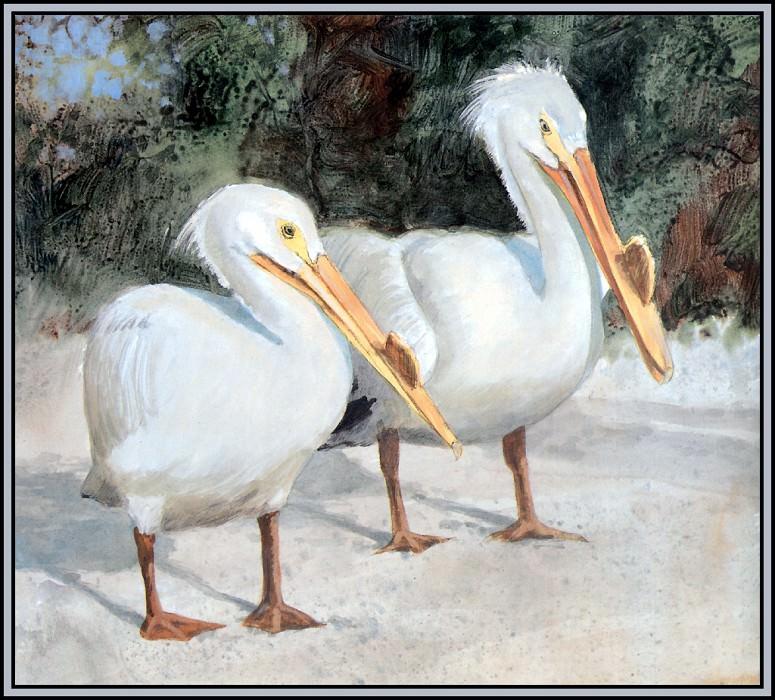 Белый пеликан 2. Роджер Бансмер