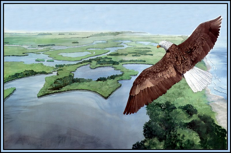 Habitat Estuaries. Roger Bansemer