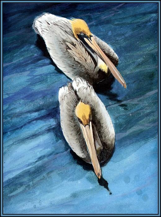Коричневый пеликан 11. Роджер Бансмер