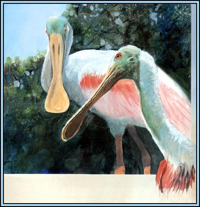 Spoonbill 1. Roger Bansemer