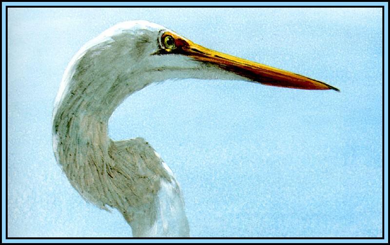 Great Egret 4. Roger Bansemer