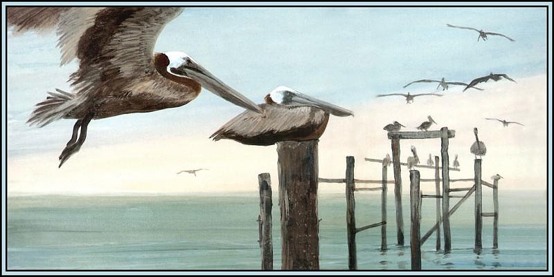 Brown Pelican 9. Roger Bansemer